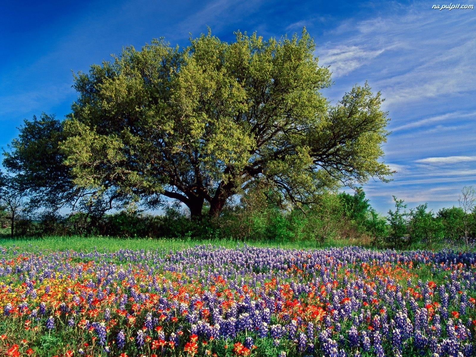 Krajobrazy Na Pulpit Wiosna Hd